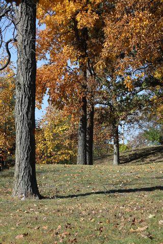 Fall 10-11