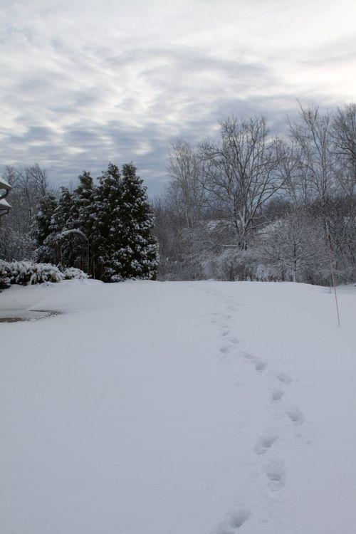 First 2011 winter snow 3